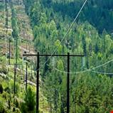 Effektive skogtiltak skal redusere risikoen for strømbrudd