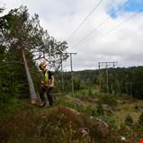 Skogtiltak skal redusere risikoen for strømbrudd i Arendal