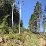 Samarbeid med skogbruket skal redusere risikoen for strømbrudd