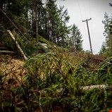 Sterk skog vil gi færre strømbrudd